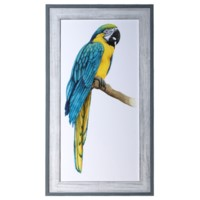 TEAL MACAW 1