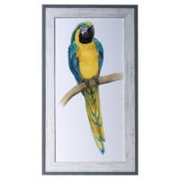 TEAL MACAW 2