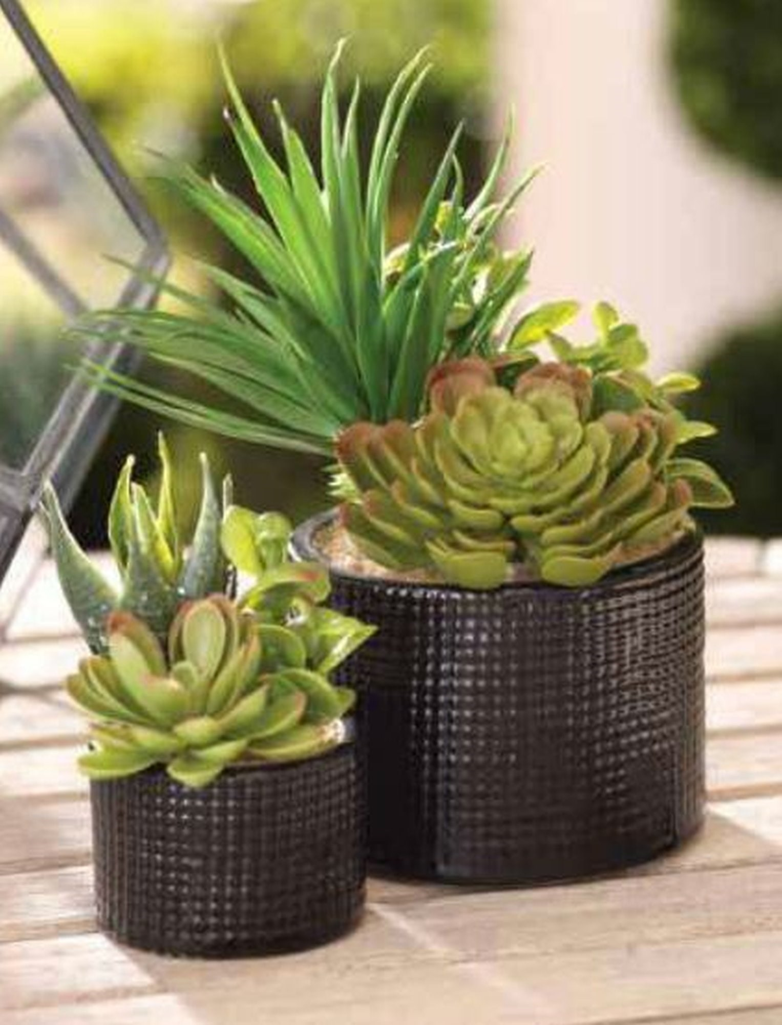 Mixed Artificial Succulents In Cylinder Small Bassman