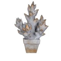 Succulent Pot Culture